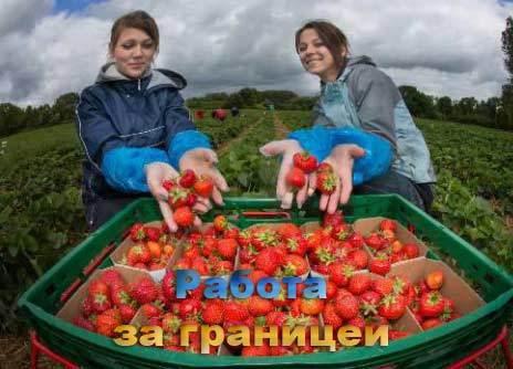 Работа в Англии в 2020 году для русских и украинцев: вакансии