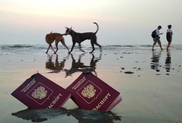 Сколько стоит электронная виза в индию 2021 году