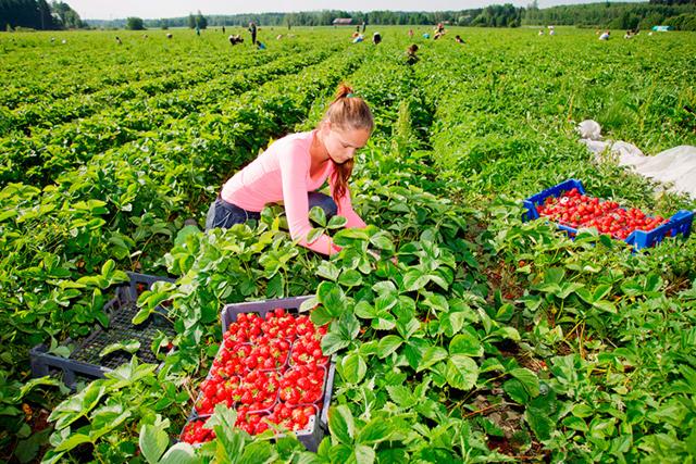 Работа в Финляндии для русских: вакансии 2020