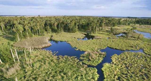 Уникальный парк Эверглейдс во Флориде