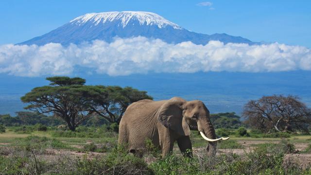 Виза в Танзанию для россиян в 2020 году: самостоятельное оформление