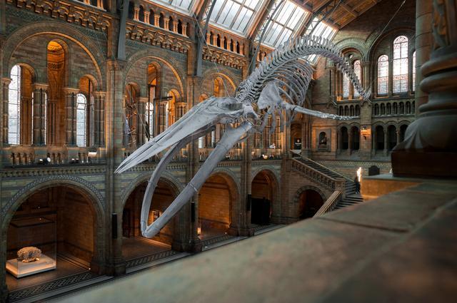 6 необычных музеев Лондона