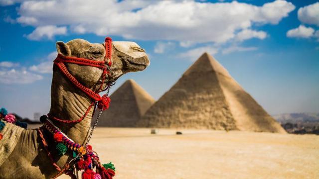 Работа в Египте для русских в 2020 году: вакансии